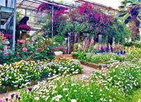 院子如何设计成私家花园你知道吗