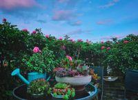 天津私人花园铺装材料的选择