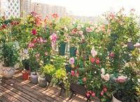 天津花园改造需具备的四个要素